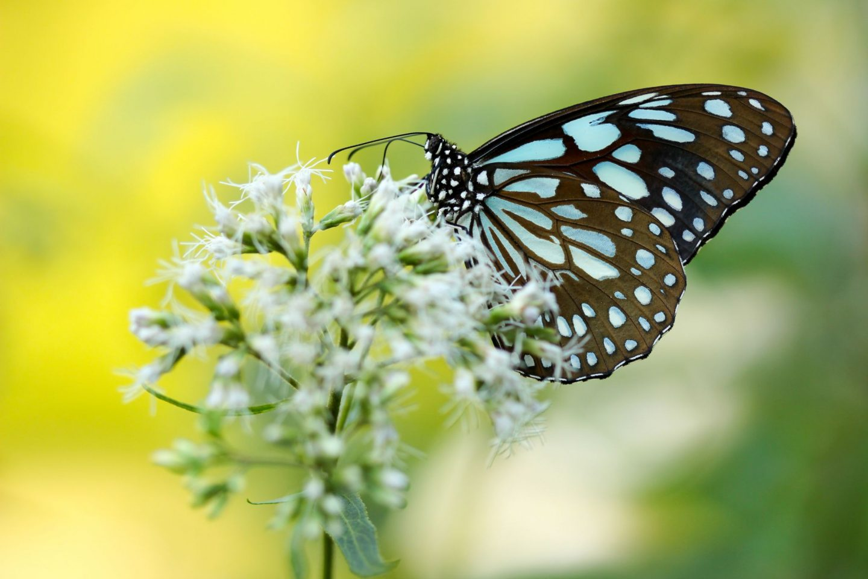 Blue butterfly on flower